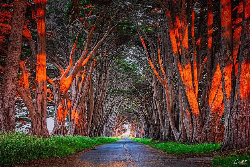 tree tunnel, Point Reyes, sunset,