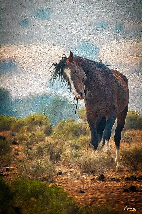 Wild Horses, Wild Mustangs, Nevada, Range, Horse