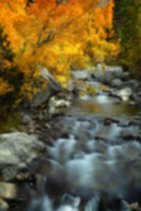 Sierra-Colour-WEB.jpg
