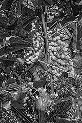 VineLand-B&W-Portrait-WEB.jpg