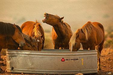 Wild Mustangs, Horses, Wild Horses, Nevada