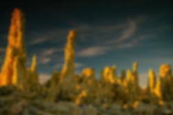 Golden-Fingers-WEB.jpg