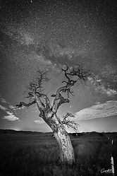 Dancing-With-The-Stars-2020-B&W-WEB.jpg