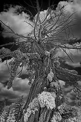 Lichen-It-B&W-WEB.jpg