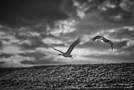 Final-Approach-B&W-WEB.jpg