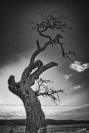 Dancing-At-Dawn-B&W-WEB.jpg