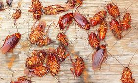 comment-se-debarrasser-insectes-rampants
