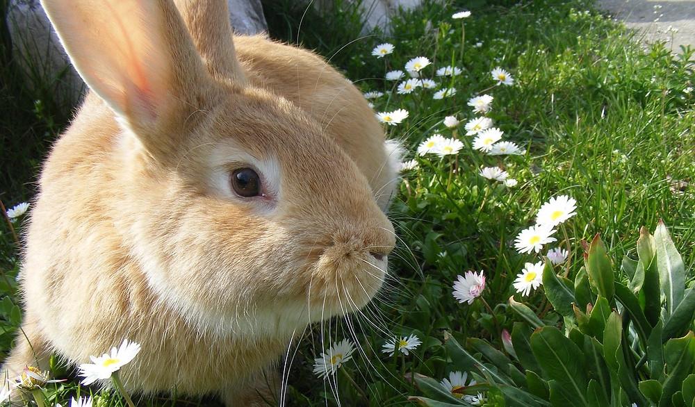 rabbit-344311_1280.jpg 2015-5-23-8:3:44