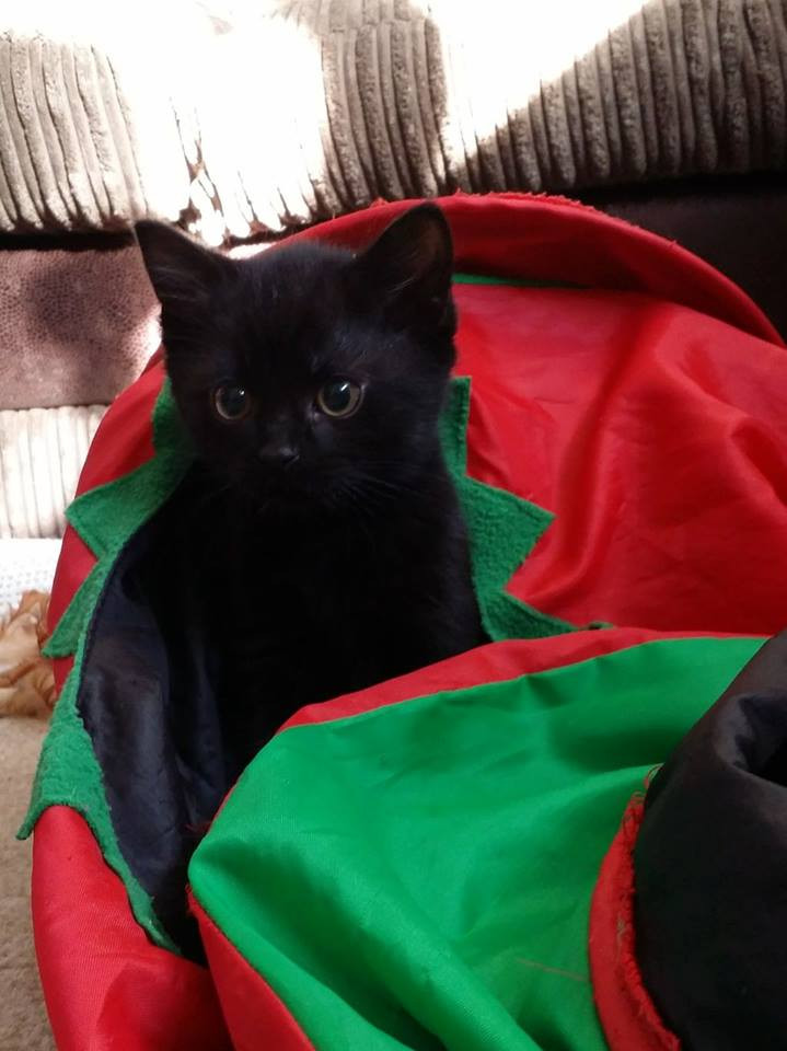 Kitten 3.jpg