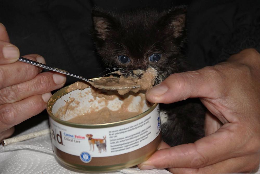 Kitten Feeding_edited.jpg