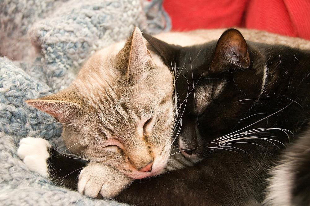 cats-277116_1280.jpg