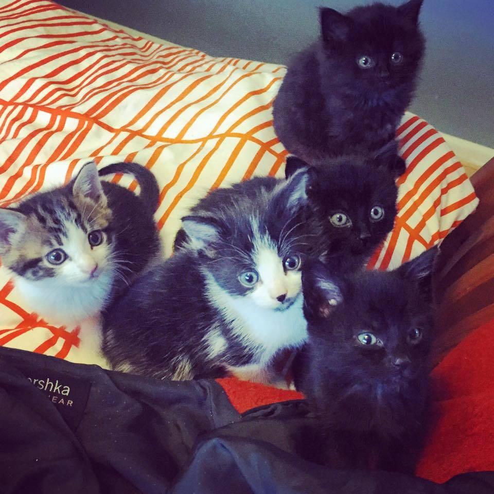 Kittens Galore 3.jpg
