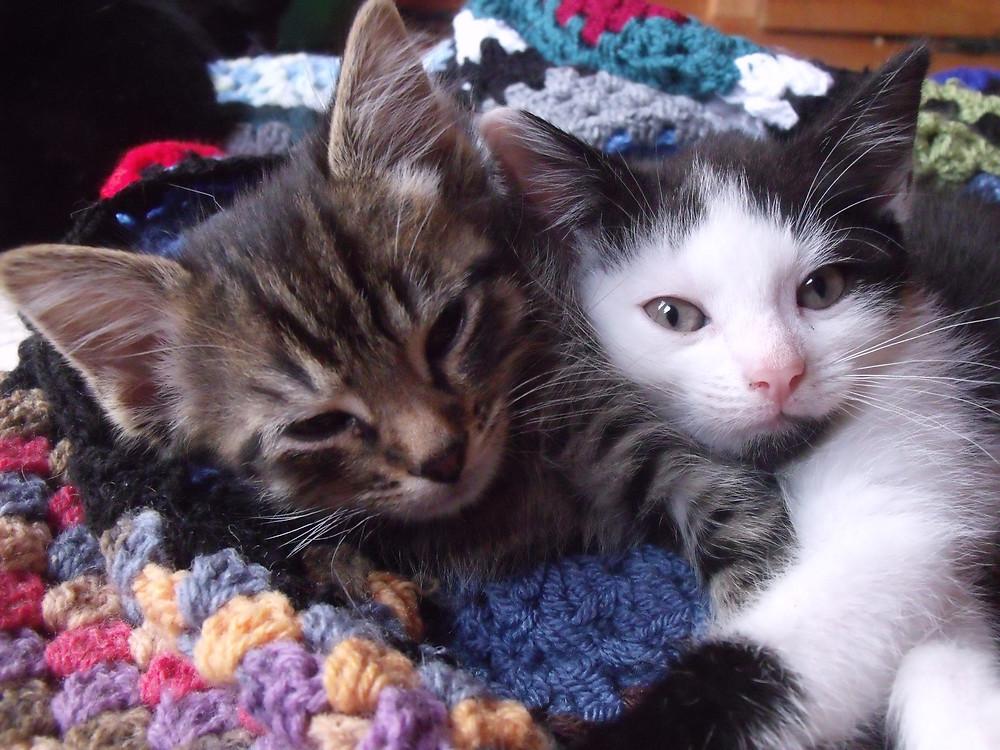 Bertie and Albert