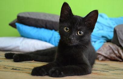 cat-907749_640.jpg