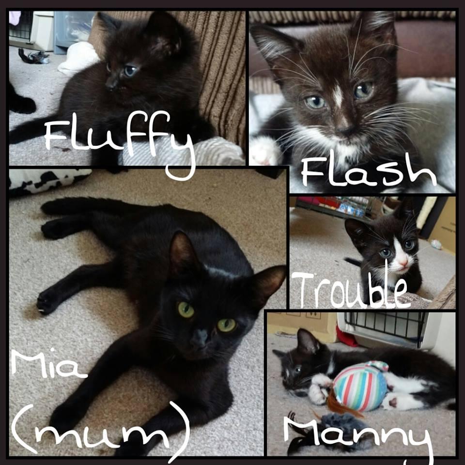 Cat and Kittens.jpg