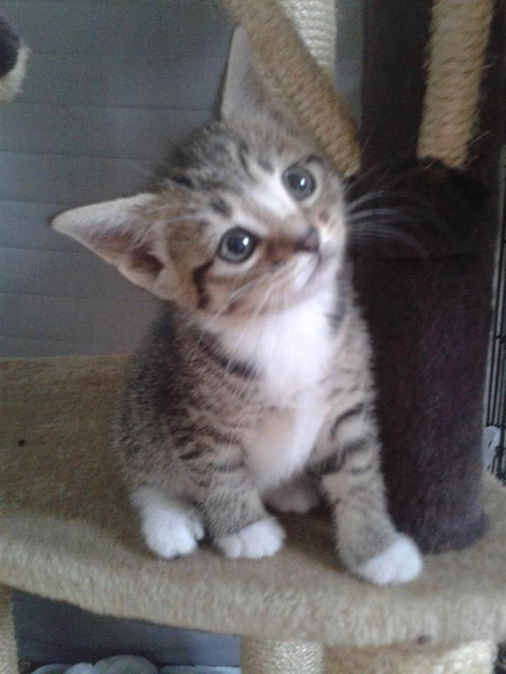 Kittens Galore 4.jpg