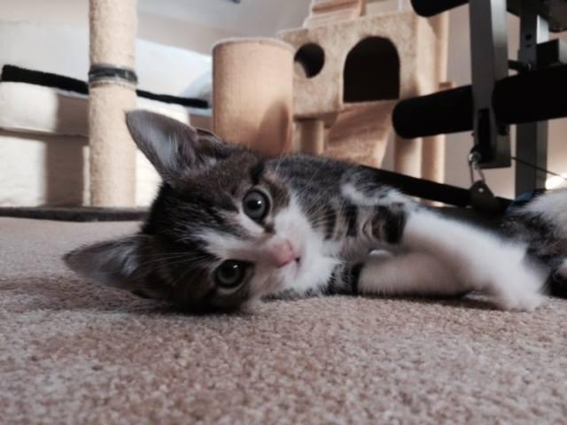 Kittens Oct 1.jpg