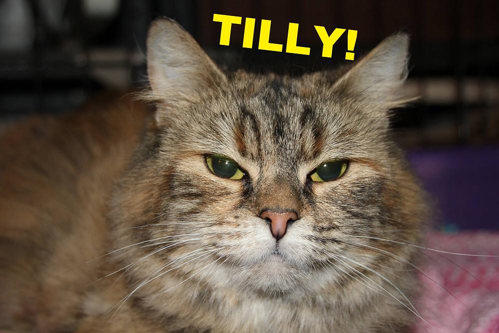 Tilly_edited.jpg