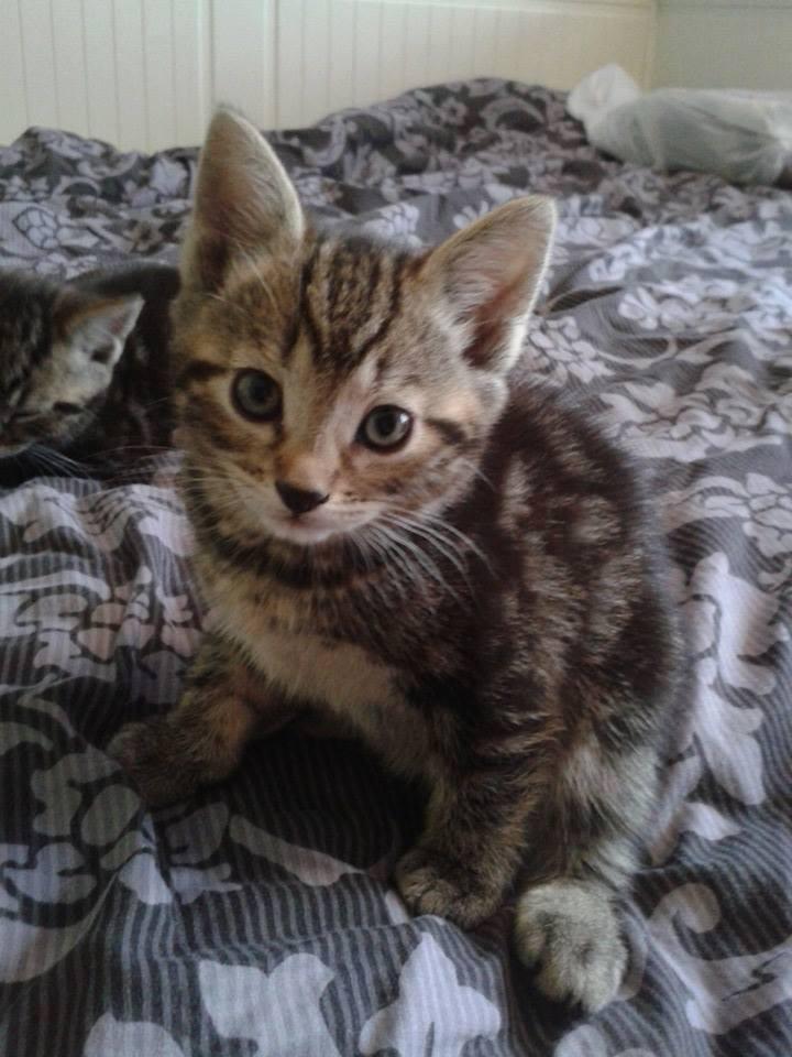 Kittens Galore 5.jpg
