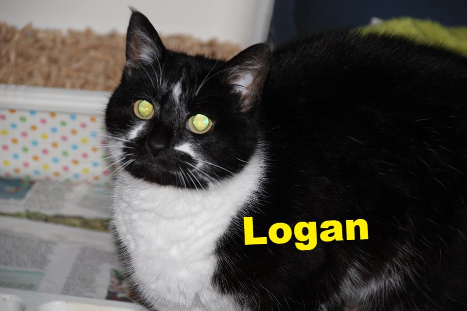 Logan_edited.jpg