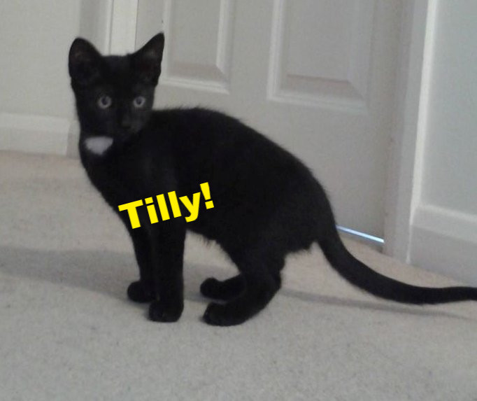 Tilly_edited.jpg