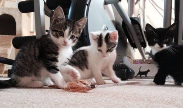Kittenst.jpg