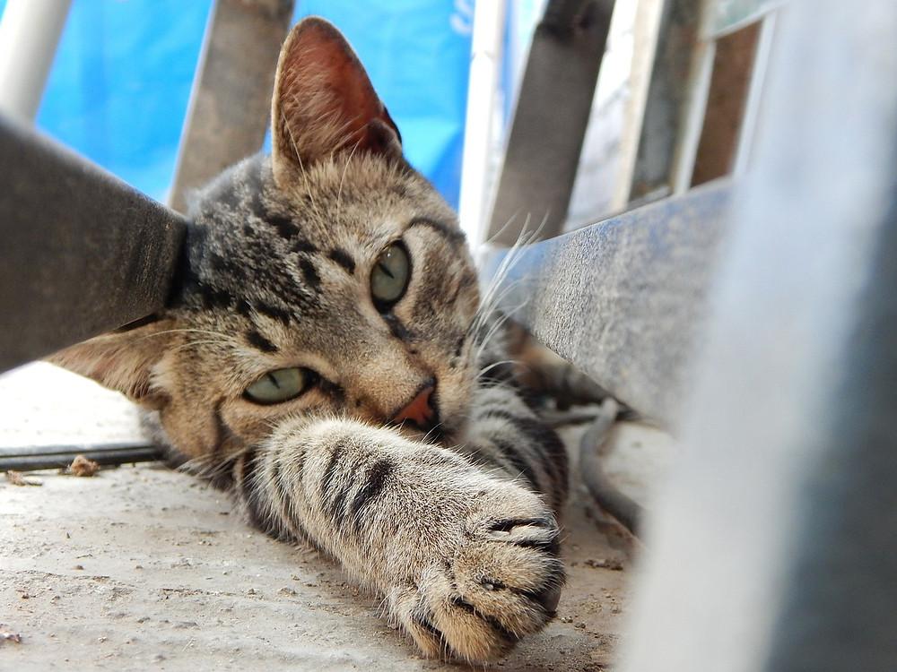 cat-633071_1280.jpg