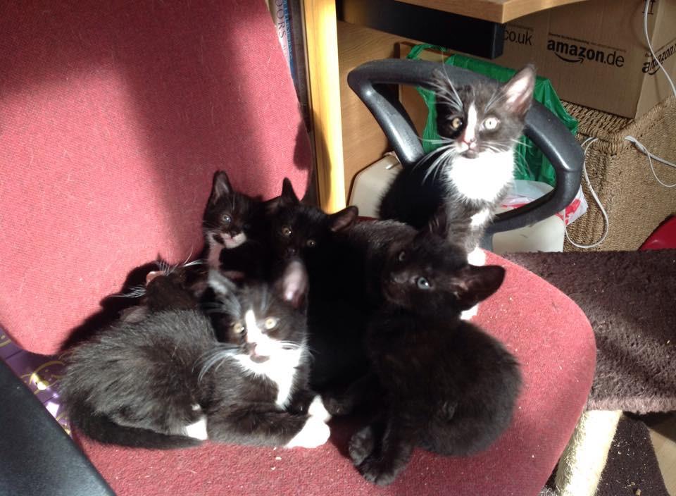 Lunas kittens.jpg