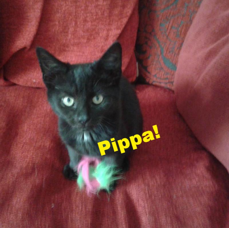 Pippa_edited.jpg