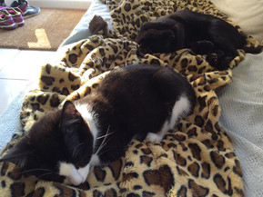 Maisie Mae & Leo snuggle up in their new home.