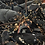 Thumbnail: Live Lobster