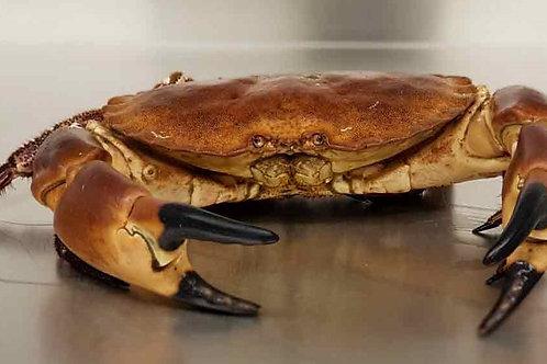 1 x Live Scottish Brown Crab (average 1kg)