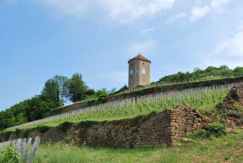 Clos de la Tour de Curon grand cru vineyard in Jura France