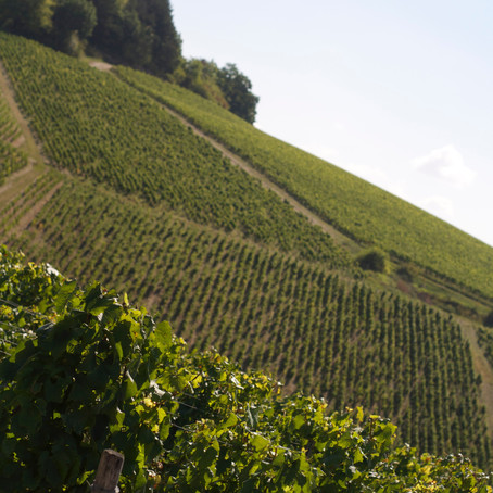 Chablis: Minerality at Its Best