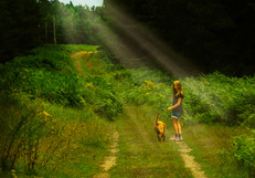 The Forest Path.jpg