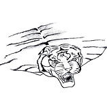 Tiger Skin Rug - Illustration 07.JPG