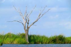 Marshland South Louisiana