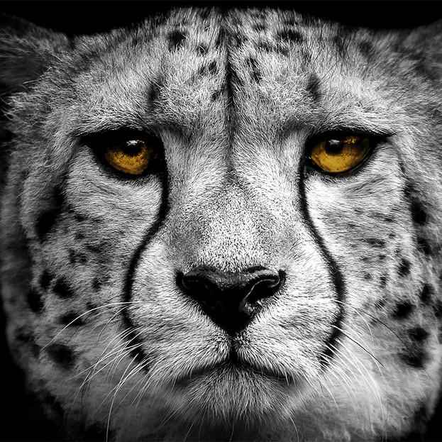 Limhouse Creative // ALLEN GRAY PHOTOGRAPHY