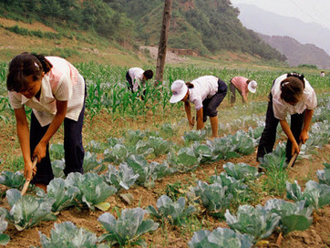 <Tuesday> North Korea Communist Party are forcing to shut down small farmland