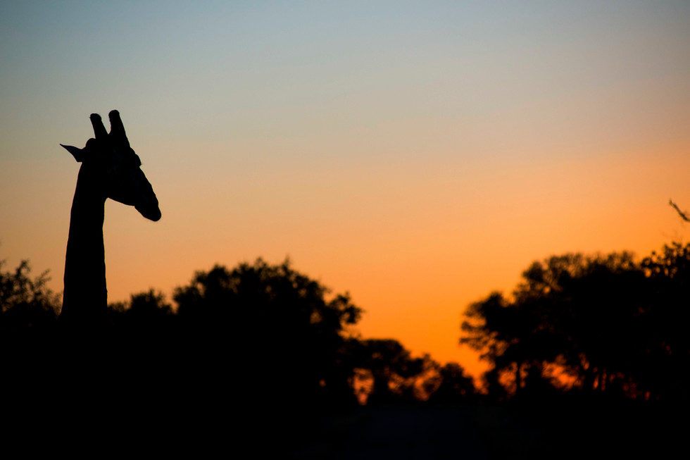 Following the sun to bed in Kruger National Park, South Africa