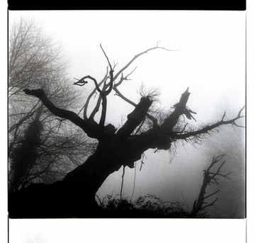 Tree + Noose + Fog = Creepiest Tree Ever in Florence, Italy (120 film)