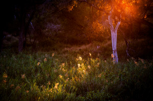 Morning light that makes the world rise in South Africa