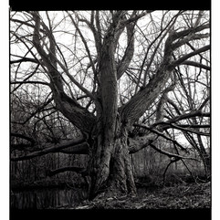 When a tree envies an octopus, Amsterdam (120 film)