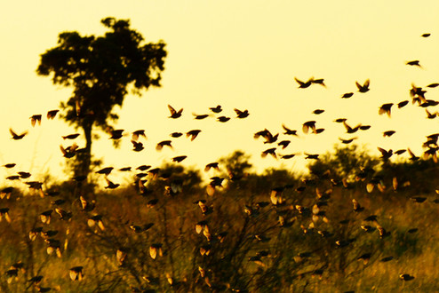 Amazing grace at sunset in Kruger National Park , South Africa