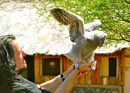 David Bates Holding Owl