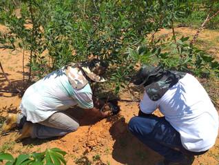 Dia da Caatinga: AGENDHA faz doação de mudas para recomposição florestal do Povo Atikum de Rodelas