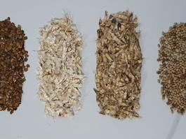 A AGENDHA produz mudas com sementes da caatinga doadas pela Universidade Federal de Campina Grande
