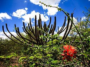 Caatinga.jpg