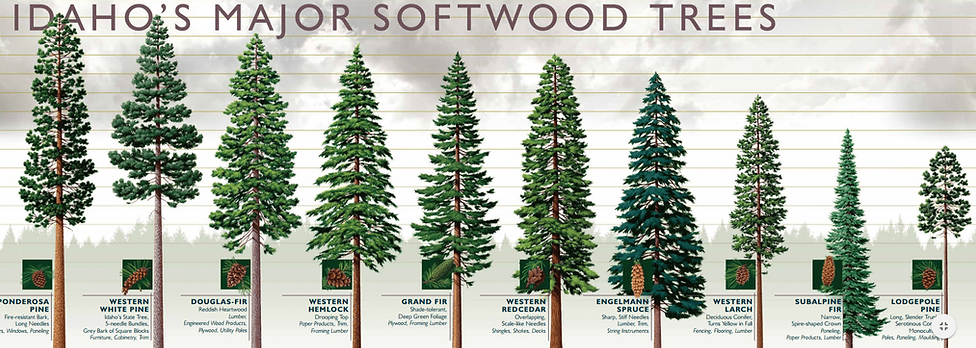 IdahoMajorSoftwoodTrees.png