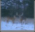 buck in field.png
